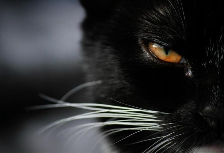 Могут ли кошки видеть потусторонний мир